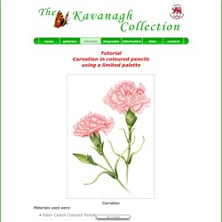 TUTORIAL - CARNATION in COLOURED PENCIL by THE KAVANAGH COLLECTION