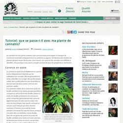 Tutoriel : que se passe-t-il avec ma plante de cannabis ?