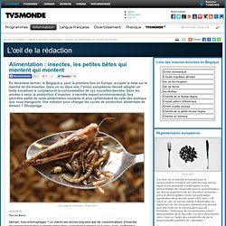 Alimentation: insectes, les petites bêtes qui montent qui montent
