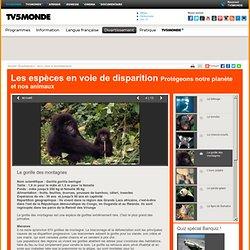 MONDE- Les espèces en voie de disparition- Le gorille des montagnes
