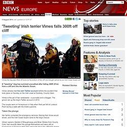 'Tweeting' Irish terrier Vimes falls 300ft off cliff