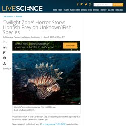 'Twilight Zone' Horror Story: Lionfish Prey on Unknown Fish Species