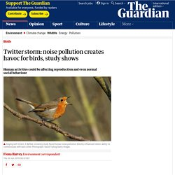 Twitter storm: noise pollution creates havoc for birds, study shows