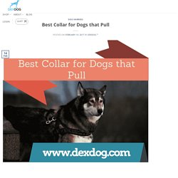 Types of Best Collar for Dogs that Pull
