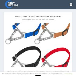 What Types Of Dog Collars Are Available?