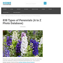 180 Perennials that Do Well in Shade (A to Z)