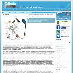 Uccelli dell'Himalaya problemi di (morfo)spazio