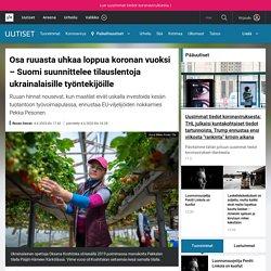 Osa ruuasta uhkaa loppua koronan vuoksi – Suomi suunnittelee tilauslentoja ukrainalaisille työntekijöille