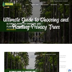 Ultimate Guide to Choosing and Planting Privacy Trees
