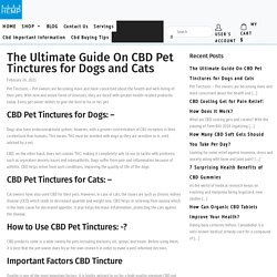 The Ultimate Guide On CBD Pet Tinctures for Dogs and Cats