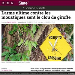 L'arme ultime contre les moustiques sent le clou de girofle
