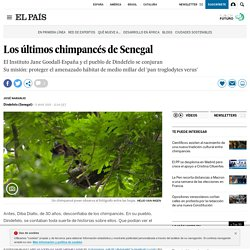 Los últimos chimpancés de Senegal