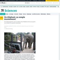 Un éléphant, ça compte énormément
