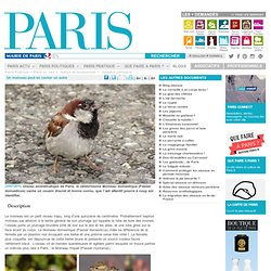 Un moineau peut en cacher un autre - Paris.fr-Mozilla Firefox