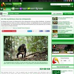 Un rite mystérieux chez les chimpanzés
