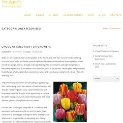 Uncategorized « Paulger's Plants & Bulbs