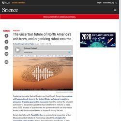 SCIENCE 07/01/21 The uncertain future of North America's ash trees, and organizing robot swarms