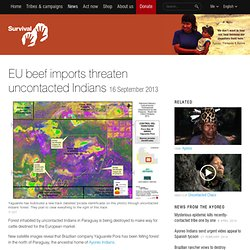 EU beef imports threaten uncontacted Indians