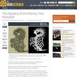 Chinese Money Tree History Uncovered By Chemistry