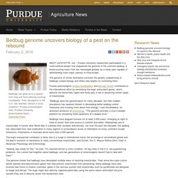 Bedbug genome uncovers biology of a pest on the rebound - Purdue University