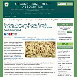 Shocking Undercover Footage Reveals Horrific Reason Why So Many US Chickens Are Chlorinated
