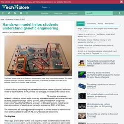 Tech Xplore - Hands-on model helps students understand genetic engineering