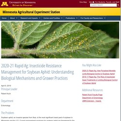 UMN_EDU 09/04/19 2020-21 Rapid Ag: Insecticide Resistance Management for Soybean Aphid: Understanding Biological Mechanisms and Grower Practices