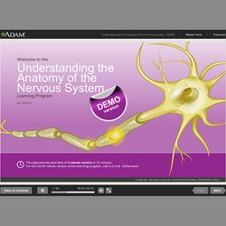 Understanding the Anatomy of the Nervous System - DEMO