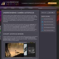 Understanding Camera Autofocus