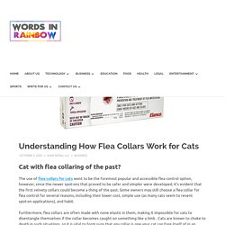 Understanding How Flea Collars Work for Cats - Let know Together