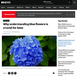 Why understanding blue flowers is crucial for bees