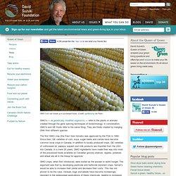Understanding GMO