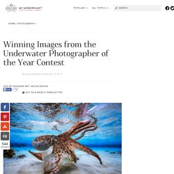 Winning Images from the Underwater Photographer of the Year Contest