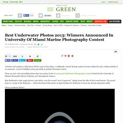 Best Underwater Photos 2013: Winners Announced In University Of Miami Marine Photography Contest