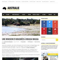 Une invasion d'araignées à Wagga Wagga, dans le NSW