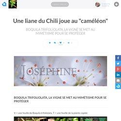 """Une liane du Chili joue au """"caméléon"""""""