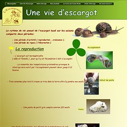Une vie d'escargot