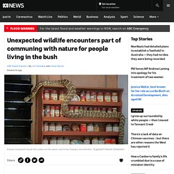 Unexpected wildlife encounters part of communing with nature for people living in the bush