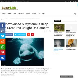 5 Unexplained & Mysterious Deep Sea Creatures Caught On Camera! - Buzz Hubb