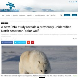 A new DNA study reveals a previously unidentified North American 'polar wolf' - ArcticToday