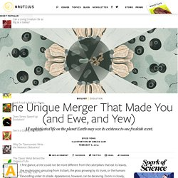 The Unique Merger That Made You (and Ewe, and Yew) - Issue 10: Mergers & Acquisitions