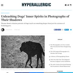 Unleashing Dogs' Inner Spirits in Photographs of Their Shadows
