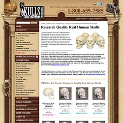 Research Quality Real Human Skulls () | Skulls Unlimited International, Inc. 1-800-659-SKULL