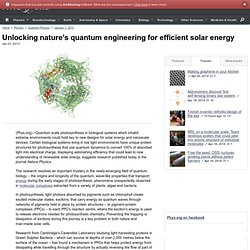 Unlocking nature's quantum engineering for efficient solar energy
