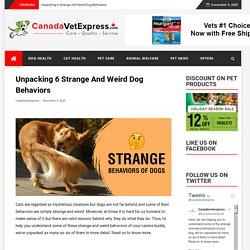 Unpacking 6 Strange And Weird Dog Behaviors