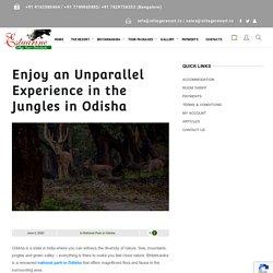 Enjoy an Unparallel Experience in the Jungles in Odisha - Estuarine Village Resort