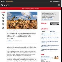 SCIENCE 12/02/20 In Somalia, an unprecedented effort to kill massive locust swarms with biocontrol