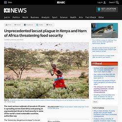 Unprecedented locust plague in Kenya and Horn of Africa threatening food security