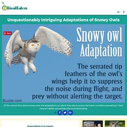 Unquestionably Intriguing Adaptations of Snowy Owls