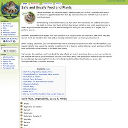 Safe and Unsafe Food and Plants - Hamster Central WIKI